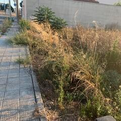 degrado e rifiuti abbandonati nella zona PIP di Andria
