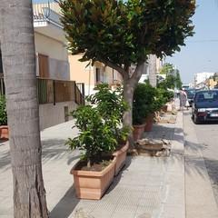 Si prende cura del verde pubblico nei pressi della sua abitazione di viale Orazio