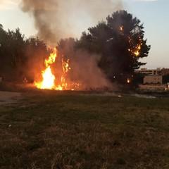 """incendio lambisce la scuola elementare """"Giuseppe Verdi"""" di Andria"""