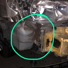 auto danneggiata da un cinghiale