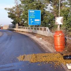 Tir perde parte del carico: olive in salamoia invadono la carreggiata