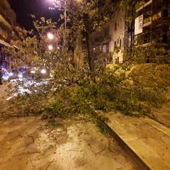 Il forte vento crea disagi alla circolazione: numerosi gli alberi abbattuti