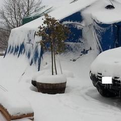 amatrice neve
