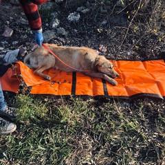 Cane investito salvato dalla Polizia Locale