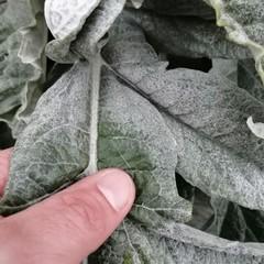 danni causati dal maltempo in agricoltura