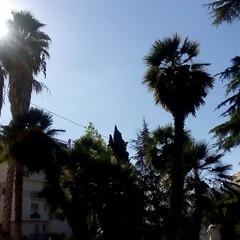 piovono topi dalle palme di piazza Cappuccini