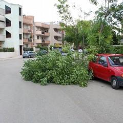 maltempo alberi abbattuti