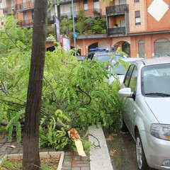 Maltempo: alberi abbattuti nella zona INPS e via Montegrappa