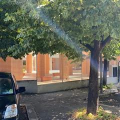 Tigli di via Sofia: auto e balconi impregnati di resina