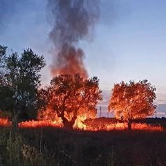 Discariche a cielo aperto date alle fiamme: accade su via Corato