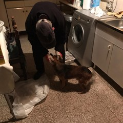 ritrovato Ciccio, il cane mascotte di Montegrosso