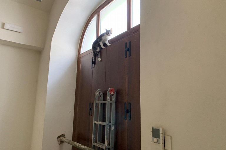 gattino rimasto chiuso in un locale