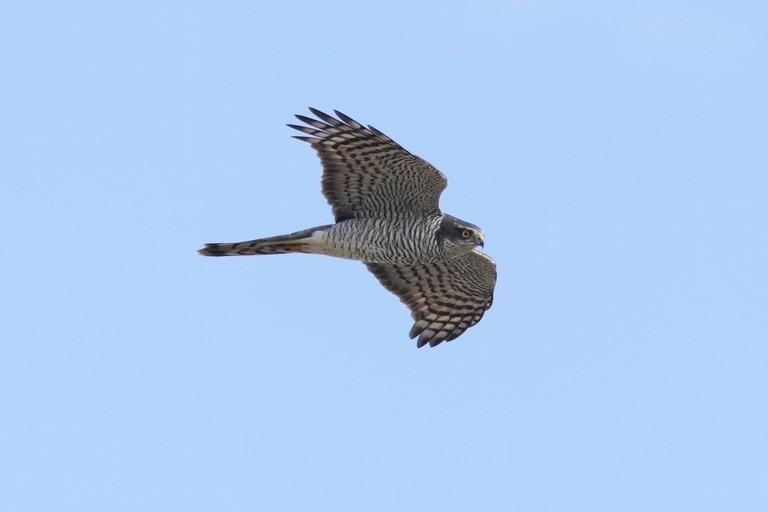 Giornata di birdwatching nel Parco Nazionale dell'Alta Murgia
