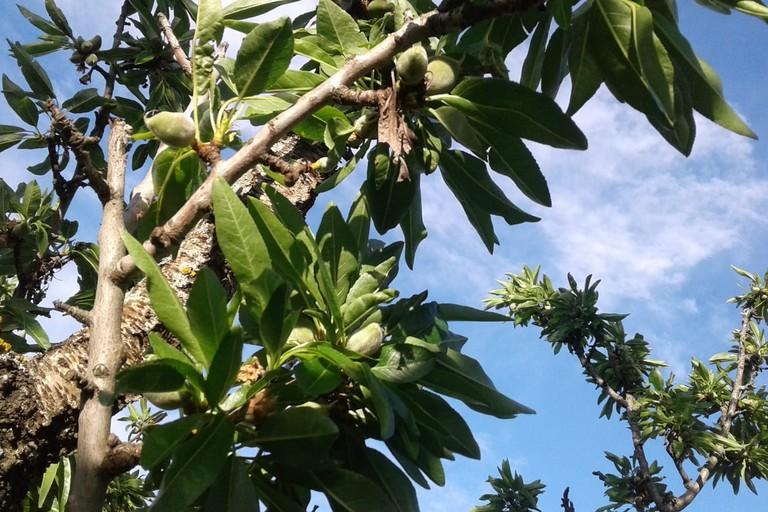 Grandinata in alcune contrade dell'agro di Andria: si temono danni alle colture