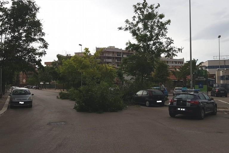 alberi caduti per il forte vento