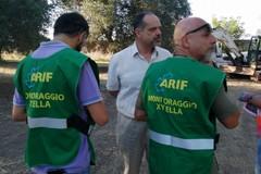 Avanza l'infezione della xylella fastidiosa: casi accertati nelle province di Taranto e Brindisi