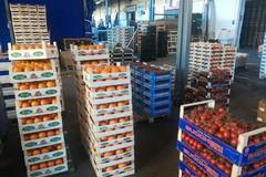 Doveroso rilancio per l'export dell'ortofrutta pugliese dopo gli effetti della Brexit e dell'embargo russo