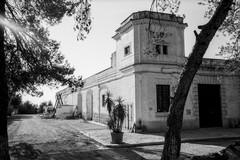 """Andria torna ad ospitare """"La Camminata tra gli olivi"""", presso l'azienda """"Le 4 contrade"""""""