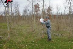 Taglio abusivo di querce nel Parco Nazionale dell'Alta Murgia
