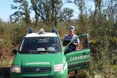 Area posta sotto sequestro dai Carabinieri Forestali