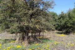 Maggiori investimenti per la ricostituzione, la cura e la tutela dei boschi in Puglia