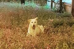 In via Vecchia Barletta ad Andria c'è chi si prende cura di un cane randagio