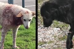 Il servizio veterinario della Asl ricovera il cane ferito al collo