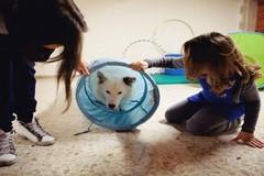 """Una giornata con la pet therapy per la RSA """"Madonna della Pace """" e la RSSA """"Madonna delle Grazie"""""""