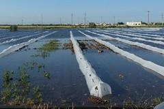 Danni ingenti per il maltempo: campi allagati per la pioggia incessante