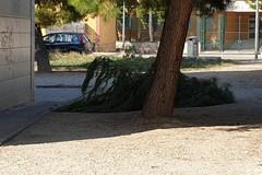 Cade grosso ramo di pino in via Luciani: per fortuna nessun ferito