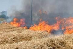 Dichiarazione dello stato di pericolosità per gli incendi boschivi per l'anno 2020
