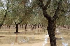 Su Andria arriva il maltempo, da domani piogge e temperature in calo