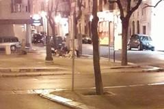 Banchetto notturno di cani tra i rifiuti abbandonati nel centro cittadino