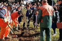 """Celebrata la Festa dell'Albero al Circolo didattico """"Rosmini"""""""