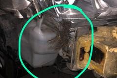 Salvi grazie alle cinture di sicurezza dopo collisione con un grosso cinghiale