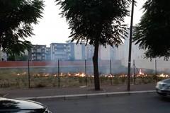 Incendio di sterpaglie nei pressi di via Vecchia Barletta: intervento dei Vigili del Fuoco
