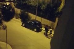 Ragazza picchiata ad Andria, l'indignazione di D'Ambrosio: «Immagini che fanno molto male»