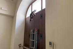 Gattino rimasto intrappolato salvato dall'intervento della Polizia Locale