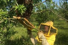 Oltre 300 fattorie didattiche e gli agriturismi pugliesi pronti per la ripartenza