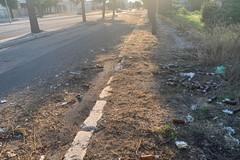 Festival di topi, serpenti e zanzare, con tanti rifiuti abbandonati nella zona PIP