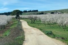 Poca acqua in agricoltura a causa del clima primaverile e temperature fino a 22 gradi