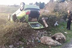 Rubano pecore e si ribaltano con l'auto sulla SS 170