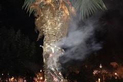 Gioca con l'accendino e incendia una palma in villa comunale
