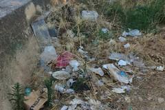 La pineta della villa comunale sommersa da rifiuti e da tanto abbandono