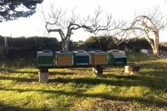 Rubate arnie di api ad Andria, l'appello al colpevole: «Torni sui suoi passi»