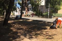 Allarme smog nelle città di Puglia: Andria ha appena lo 0,3% di verde pubblico
