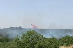 """Incendi boschivi, Montepulciano: """"Crimine contro l'umanità"""""""