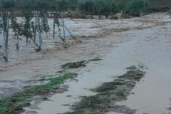 """Maltempo, Coldiretti Puglia: """"Aumenta la stima dei danni. Il 78% Comuni a rischio idrogeologico"""""""