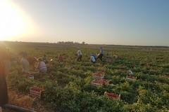 Rete lavoro agricolo di qualità, nella Bat solo 8 aziende iscritte