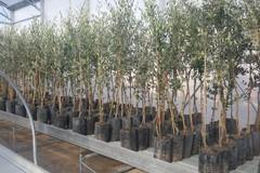 Agricoltura biologica e Xylella: Regione adotta due provvedimenti a tutela colture